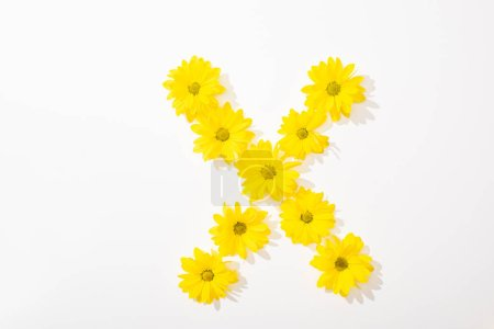 Photo for Top view of yellow daisies arranged in letter X on white background - Royalty Free Image
