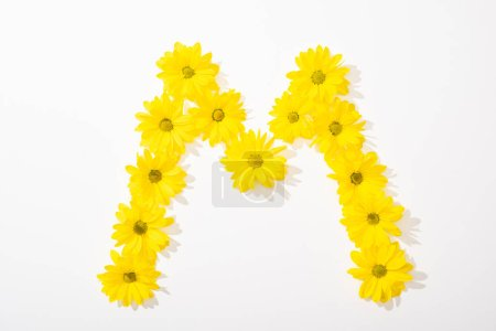 Photo for Top view of yellow daisies arranged in letter M on white background - Royalty Free Image