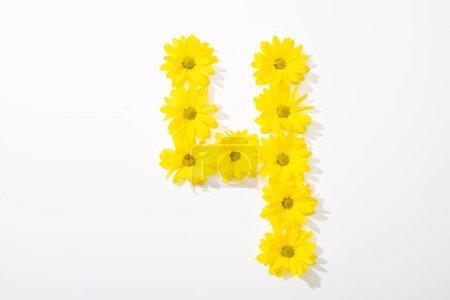 Foto de Vista superior de las margaritas amarillas dispuestas en el número 4 sobre fondo blanco. - Imagen libre de derechos