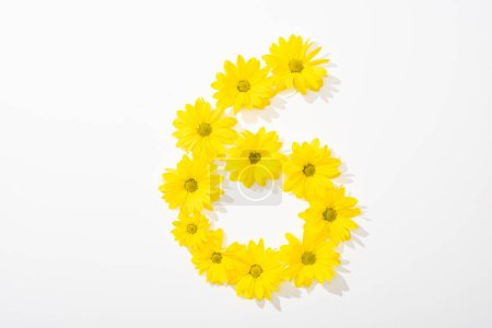Photo for Top view of yellow daisies arranged in number 6 on white background - Royalty Free Image