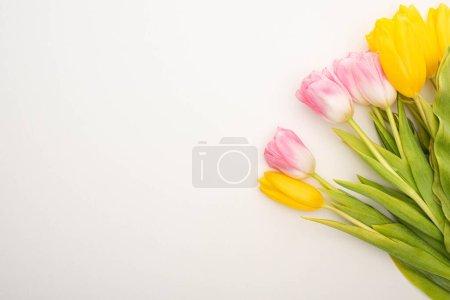 Photo pour Vue en haut des tulipes sur fond blanc, concept du ressort - image libre de droit