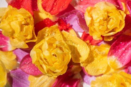 Photo pour Focus sélectif de pétales de tulipes avec gouttes d'eau - image libre de droit