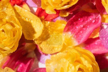 Foto de Enfoque selectivo de pétalos brillantes con gotas de agua - Imagen libre de derechos