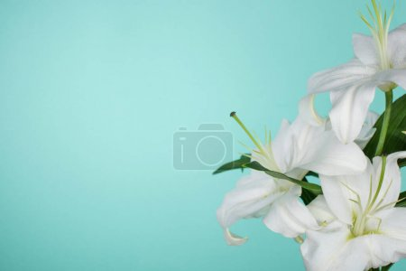 Photo pour White lilies with green leaves isolated on turquoise - image libre de droit