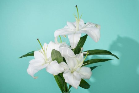 Photo pour White lilies with green leaves on turquoise background - image libre de droit