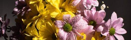 Bouquet aus gelben und violetten Gänseblümchen mit Wassertropfen, Panoramaaufnahme