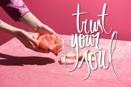 Photo pour Cropped view of woman holding rose petals above velour cloth isolated on pink, trust your soul illustration - image libre de droit