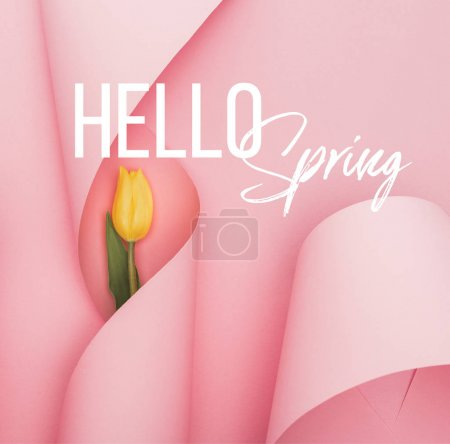 Photo pour Top view of yellow tulip and paper swirls on pink background, hello spring illustration - image libre de droit