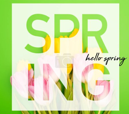 Photo for Top view of pink and yellow tulips on green background, spring illustration - Royalty Free Image