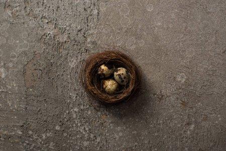 Foto de Top view of quail eggs in nest on grey textured background - Imagen libre de derechos
