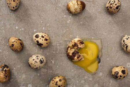 Foto de Top view of smashed quail egg surrounded by whole eggs on grey concrete background - Imagen libre de derechos