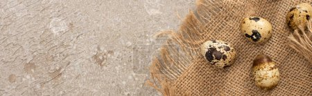 Foto de Panoramic shot of quail eggs on sackcloth on grey cement background - Imagen libre de derechos