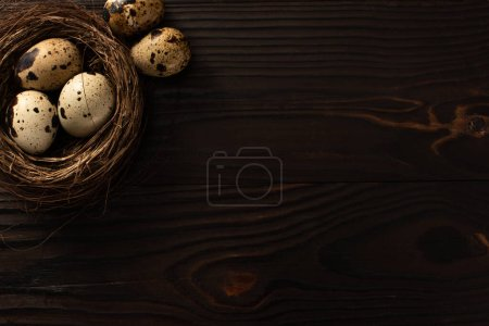 Photo for Top view of quail eggs in nest on dark wooden background - Royalty Free Image