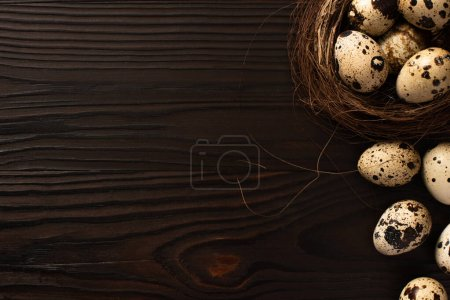 Photo for Top view of quail eggs in brown nest on and on dark wooden surface - Royalty Free Image