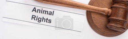 Photo pour Photo panoramique du marteau du juge et de l'inscription des droits des animaux sur fond blanc - image libre de droit