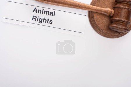Photo pour Vue de dessus du marteau du juge et inscription des droits de l'animal sur fond blanc - image libre de droit