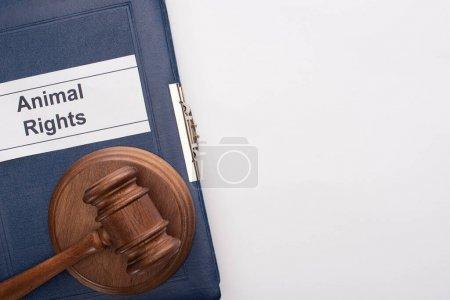 Photo pour Vue du haut du marteau du juge sur le livre bleu avec inscription des droits des animaux sur fond blanc - image libre de droit