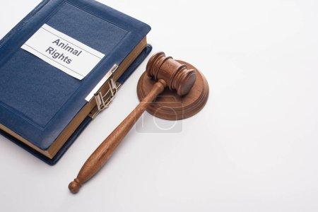 Photo pour Vue grand angle du marteau du juge et livre bleu avec inscription des droits des animaux sur fond blanc - image libre de droit