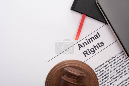 top view of animal rights inscription, black notebooks, smartphone and judge gavel on white background