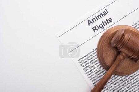 Photo pour Vue du haut du marteau du juge animal sur l'inscription des droits des animaux sur la surface blanche - image libre de droit
