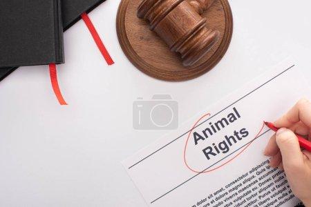 Photo pour Vue partielle d'une femme encerclant l'inscription des droits des animaux avec un feutre rouge près du marteau du juge et des cahiers noirs sur fond blanc - image libre de droit