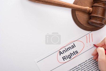 Photo pour Vue partielle de la femme mettant en évidence l'inscription des droits des animaux près du juge gavel sur fond blanc - image libre de droit