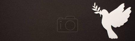 Photo pour Vue de dessus de colombe de papier blanc coupé sur fond noir, vue panoramique - image libre de droit