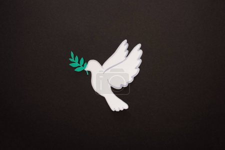 top view of white dove as symbol of peace on black background