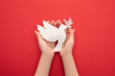 Photo pour Vue recadrée de la femme tenant colombe blanche comme symbole de paix dans les mains sur fond rouge - image libre de droit