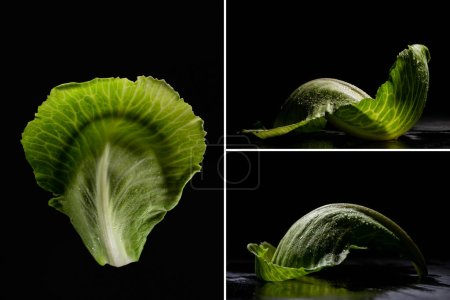 Foto de Collage of wet green cabbage leaves isolated on black. - Imagen libre de derechos