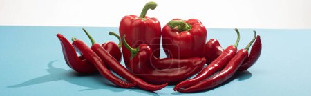 fresh red bell peppers and chili on blue surface on white background, panoramic shot
