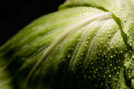 Photo for Close up view of wet fresh cabbage leaf isolated on black - Royalty Free Image
