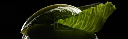 Photo for Close up view of wet green cabbage leaf isolated on black, panoramic shot - Royalty Free Image