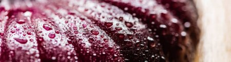 Photo for Close up view of wet cut onion with water drops, panoramic crop - Royalty Free Image