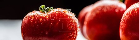 Photo for Selective focus of fresh ripe red tomato with water drops isolated on black, panoramic crop - Royalty Free Image