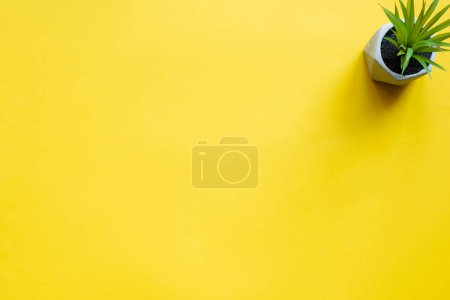 Photo for Top view of potted plant on yellow surface with copy space - Royalty Free Image