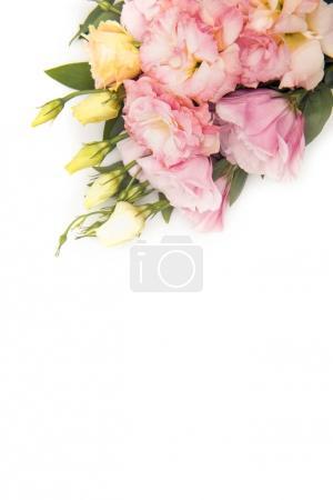 Photo pour Vue de dessus des belles fleurs tendres et des bourgeons isolés sur blanc - image libre de droit