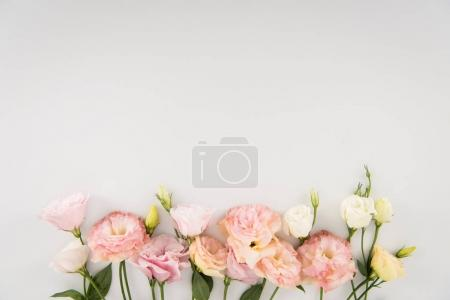 Photo for Close-up view of beautiful tender flowers isolated on grey background - Royalty Free Image