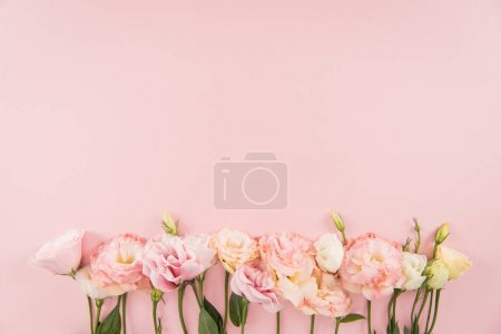 Photo for Top view of beautiful tender blooming eustoma flowers isolated on pink background - Royalty Free Image