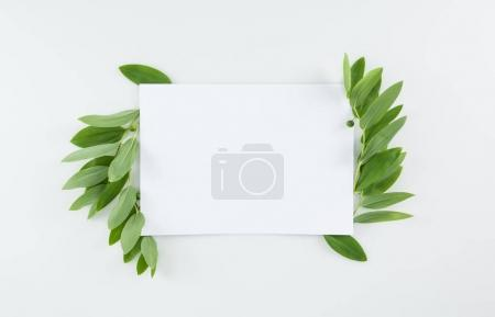 Photo for Top view of blank card with fresh green leaves isolated on white - Royalty Free Image