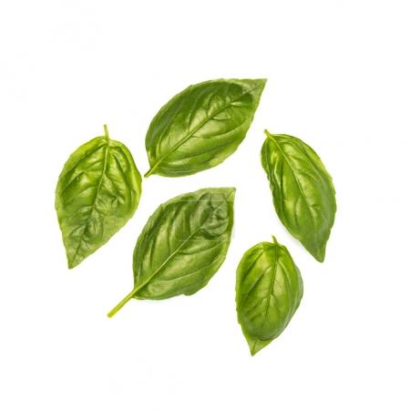 Photo for Composition of fresh basil leaves isolated on white - Royalty Free Image