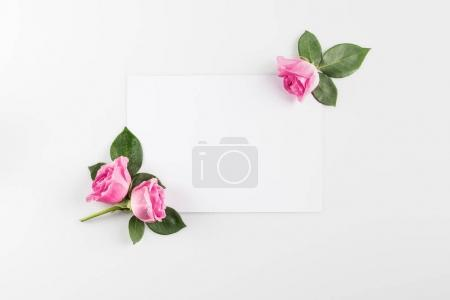 Photo for Floral composition with pink roses and blank card, isolated on white - Royalty Free Image