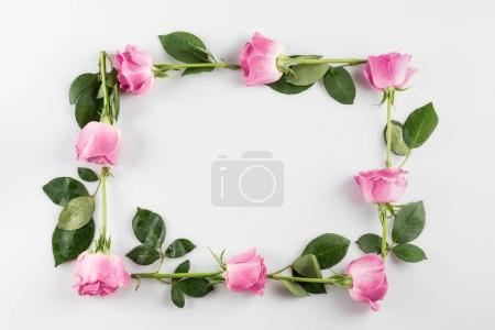 Photo for Floral frame with pink roses, isolated on white - Royalty Free Image