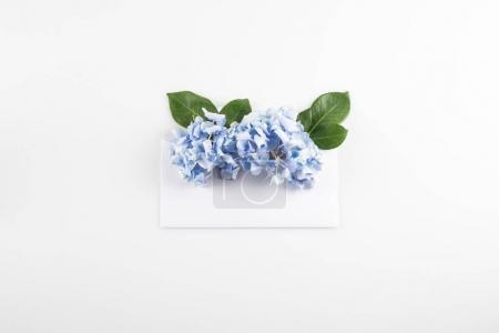 hydrangea flowers in envelope