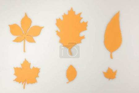 various autumnal leaves