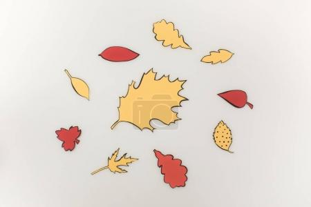 various drawn autumnal leaves