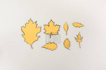 Photo for Various drawn autumnal leaves isolated on white - Royalty Free Image