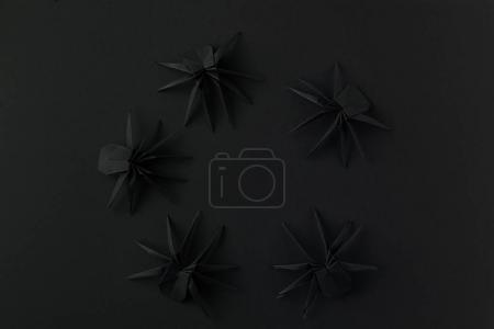 Halloween spiders in circle