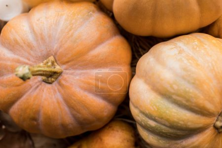 Photo for Top view of ripe fresh organic pumpkins on rustic table - Royalty Free Image