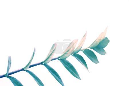 Foto de Cerca de la planta filtrado verde, aislado en blanco con espacio de copia, estilo minimalista - Imagen libre de derechos